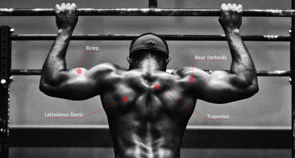 Are Pull-Ups Good for MMA - here are the muscle groups