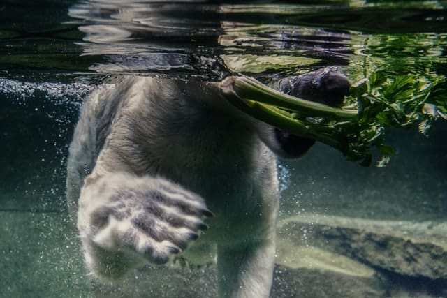 bear eating celery which are negative calorie foods real